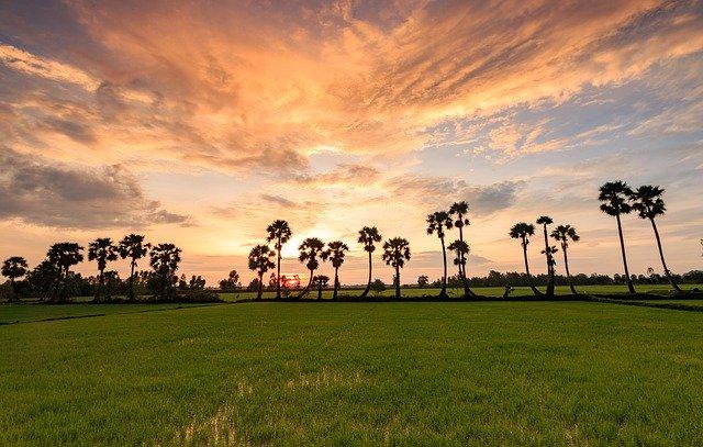 ベトナム草原